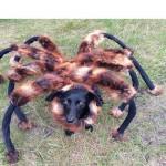 الكلب العنكبوت