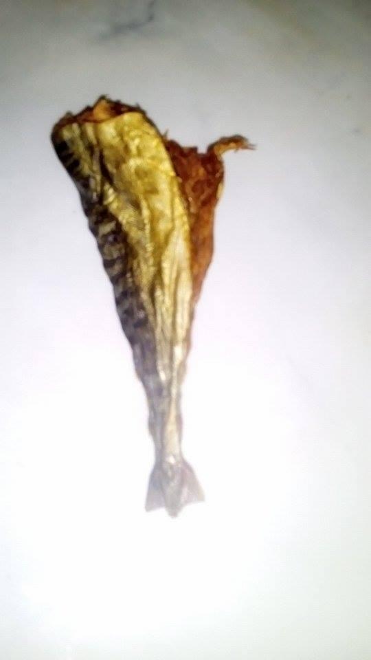 13-بعد 450 يوم من التحنيط  14-أول سمكة مكريل